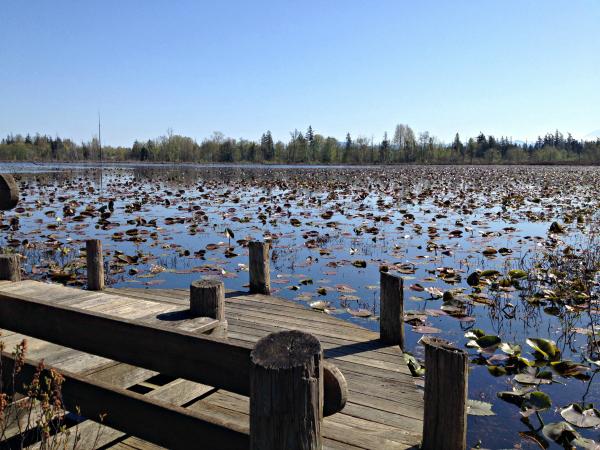 Tenant Lake in Ferndale